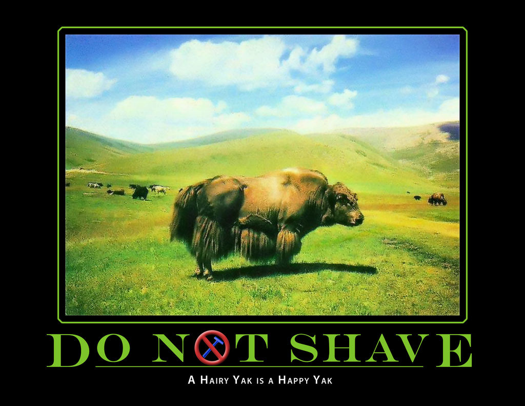 Do Not Shave, A hairy Yak is a Happy Yak